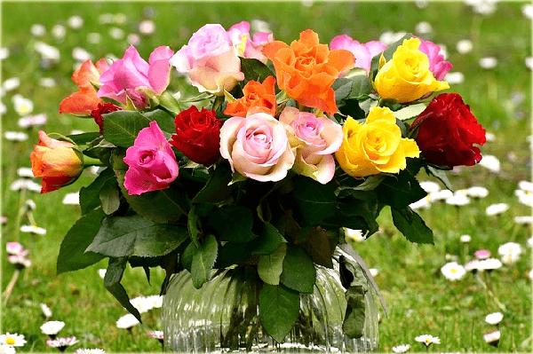 Rosas Exoticas