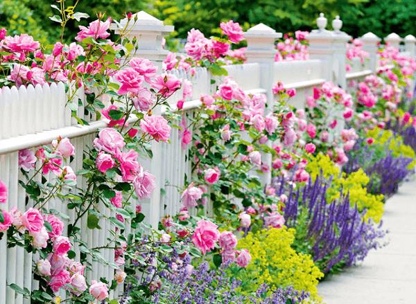 como adornar jardin con rosales