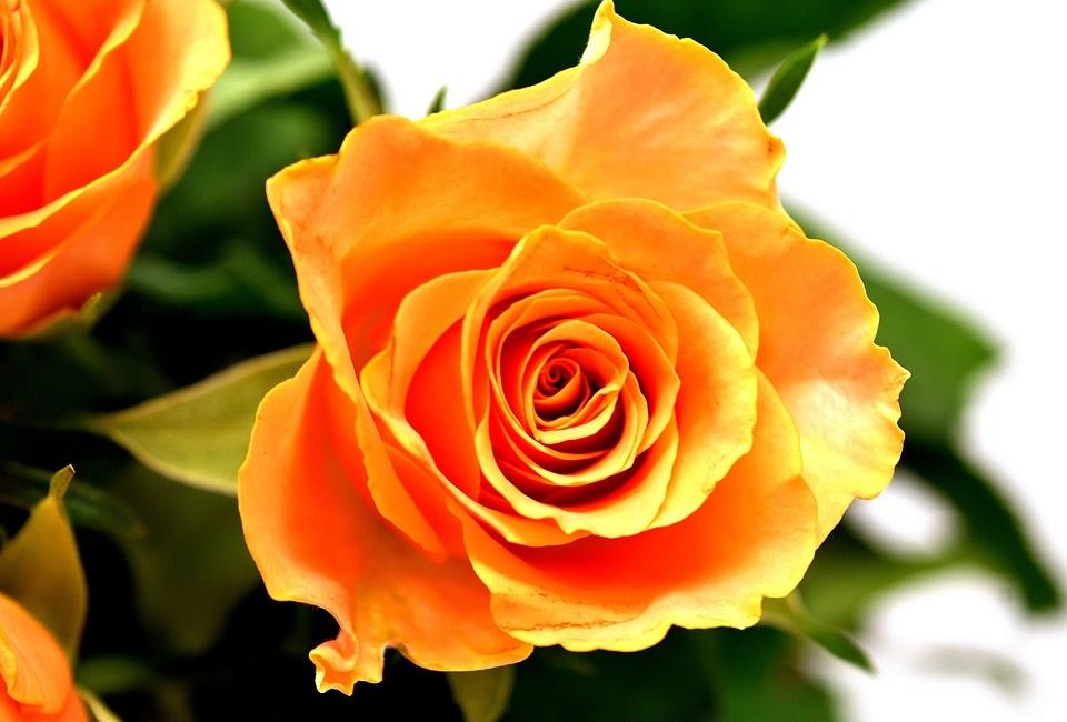 Resultado de imagen para imagenes de flores exoticas