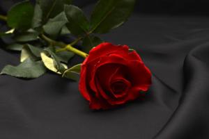Rosas Exóticas, significado de rosas naturales, nombres de rosas